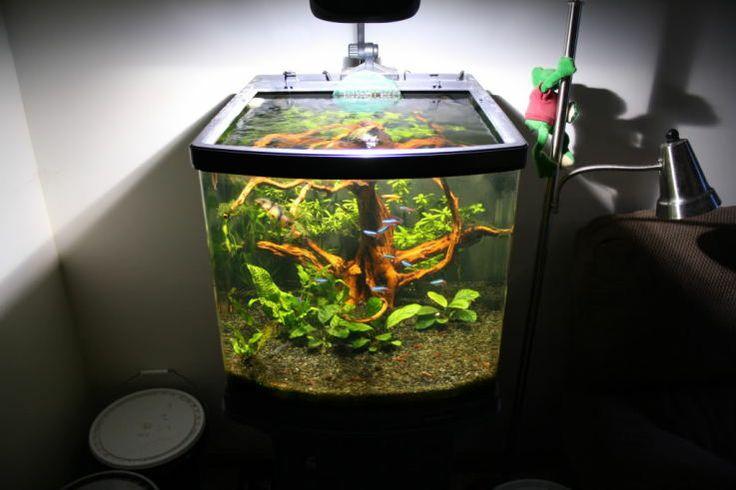 1000 images about cubes on pinterest fish tanks biorb - Petit aquarium design ...