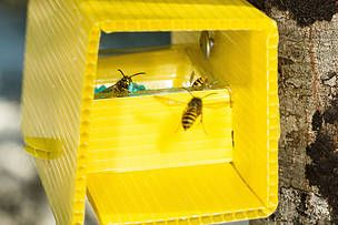 NZ innovation shines in war against wasps