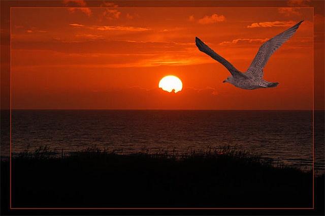 jonathan livingston seagull free pdf