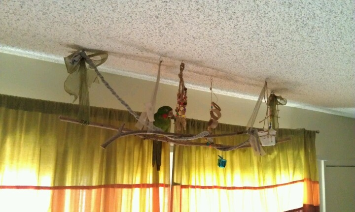 Homemade hanging parrot perch. Our conur loves it. It's so expensive to buy toys so we made are own :)