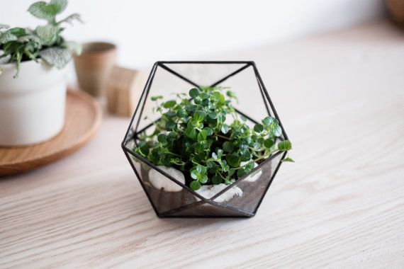 FREE SHIPPING  geometric glass terrarium by boxwoodtree on Etsy