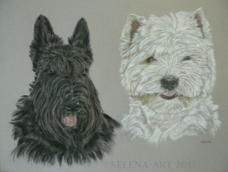 Pasteltekening Schotse Terrier en Westie 40x50