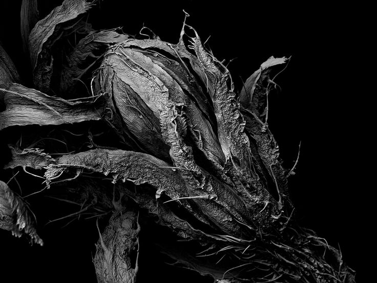 """Matsuura Tomoya, Withered plant """"Unknown"""" — larghezza dell'immagine 2 mm"""