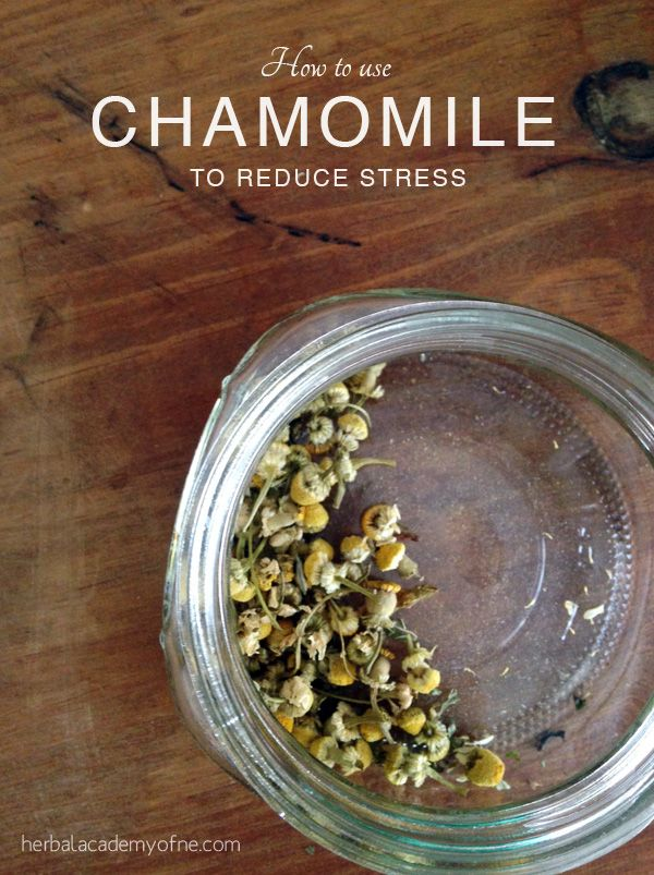 How to Use Chamomile to Reduce Stress - Herbal Academy of New England