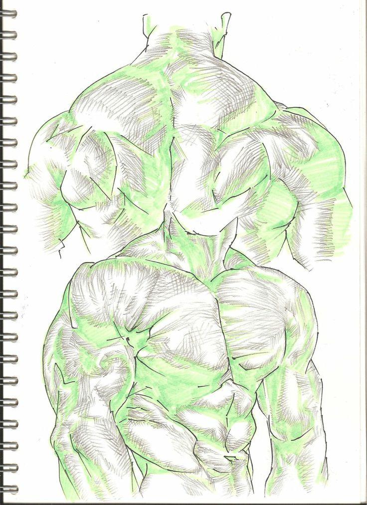 Character Design Study : Muscle study by shotakotake viantart on deviantart