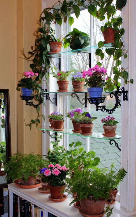 Miniature African Violets ... Love love love the glass shelves