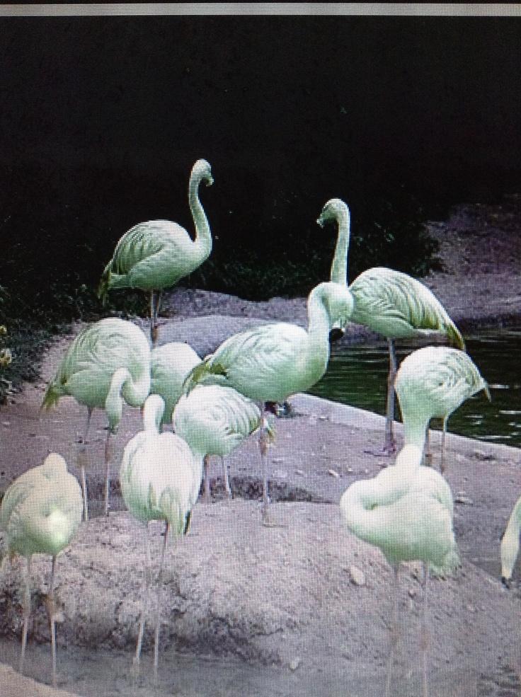 Green Flamingo Ug