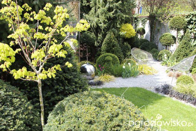 Ogród nie tylko bukszpanowy - część III - strona 533 - Forum ogrodnicze - Ogrodowisko
