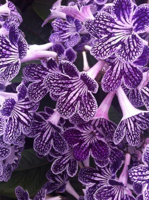 #flowers #pretty #floral #British #summer #hamptoncourt