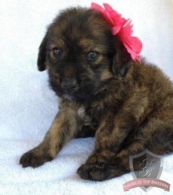 Puppys on Pinterest
