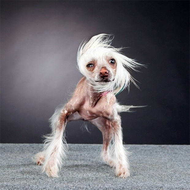 Naked dog Nude Photos 79