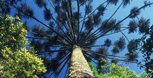rainforest-tree-490x250