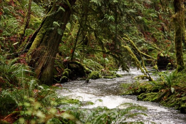 Tod Creek: Cools the spirit and the feet