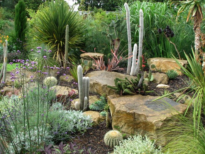 Cactus Garden Ideas garden ideas cactus rock garden ideas youtube Best 25 Outdoor Cactus Garden Ideas On Pinterest