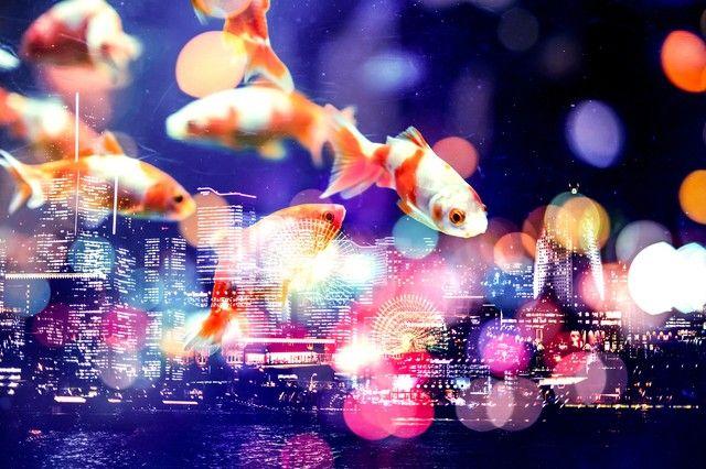 夜空を優雅に泳ぐ金魚(フォトモ...