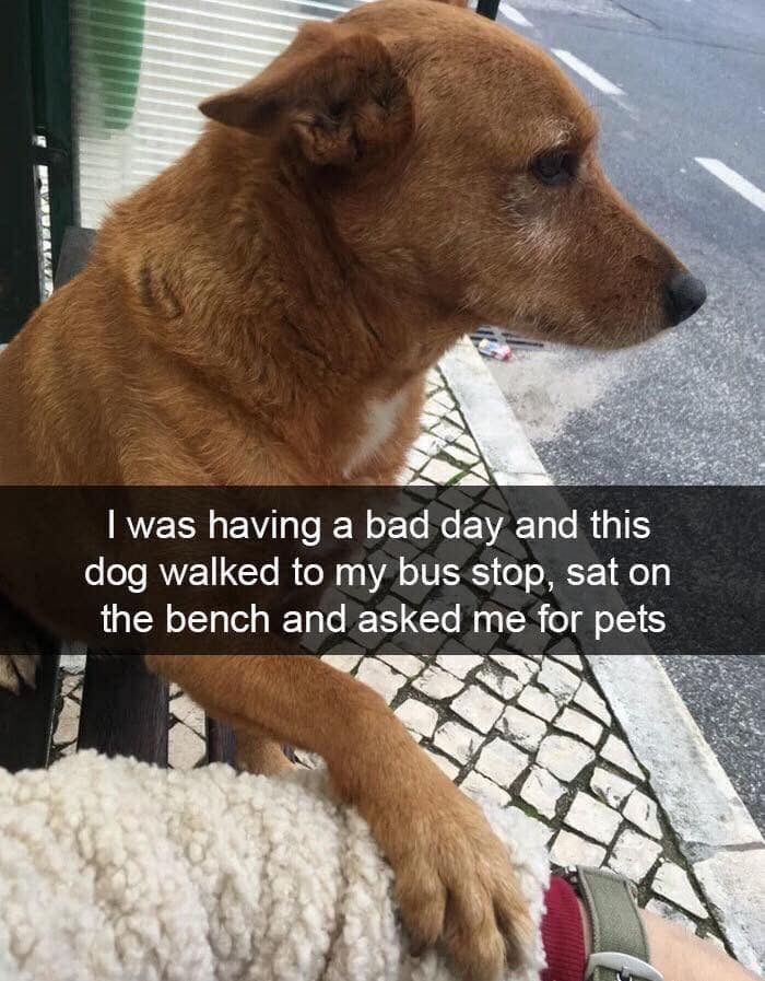 Dog Snaps That Are Equal Parts Cute And Derpy Dog Snapchats Funny Cats And Dogs Funny Pictures For Kids