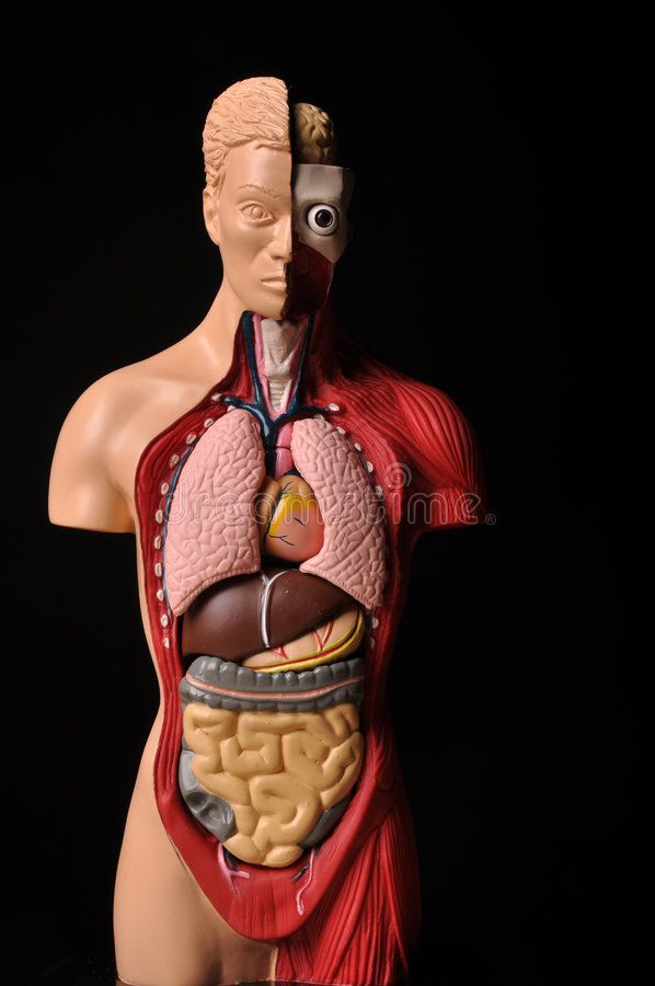 Pictures Of Inside The Human Body