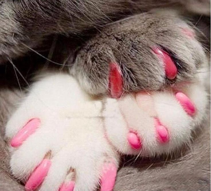 26 best Cats with nail polish images on Pinterest | Nail polish ...