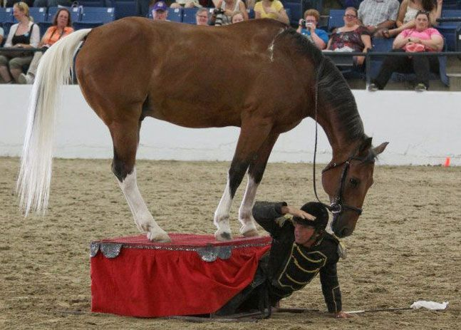 how to become a horse riding instructor