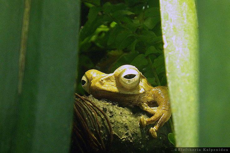reptiles and amphibians - ερπετά και αμφίβια (Schönbrunn Zoo Vienna)