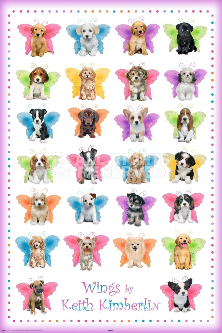 best images about keith kimberlin posters fleece maxi poster keith kimberlin wings dogs art no