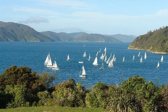 Regatta im Marlborough Sound