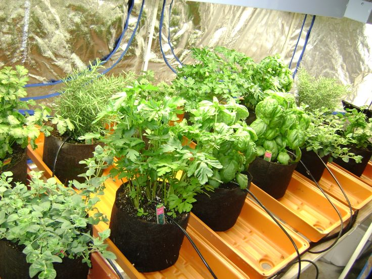 Miracle Grow Hydroponic Indoor Hydroponic Gardening Youtube