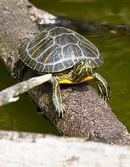 13 Steps for Creating an Awesome Pet Turtle Habitat