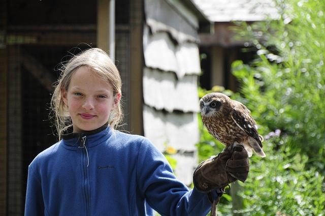 Roofvogels!  www.ideekids.be/dierenverzorgerskamp
