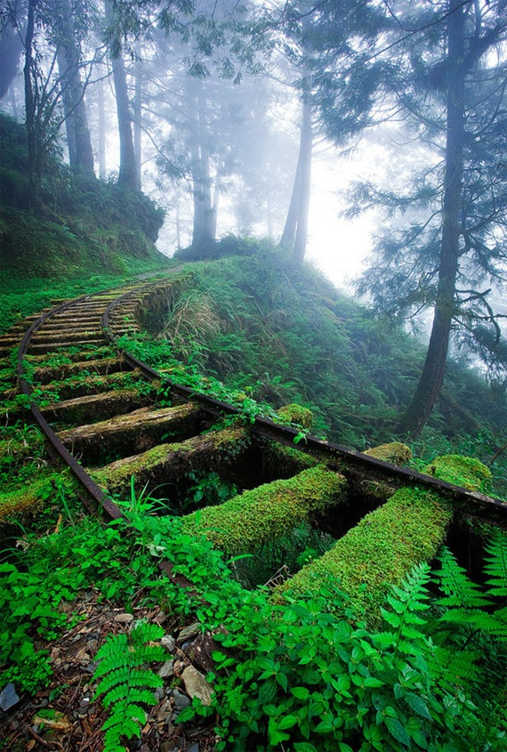Taipingshan National Forest