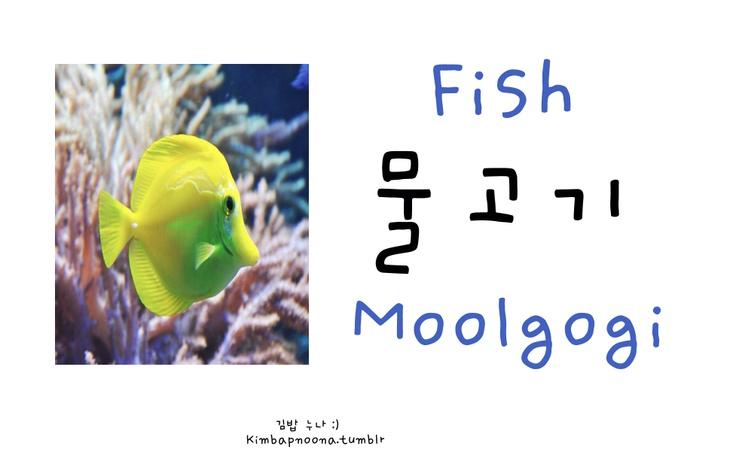 Fish moolgogi korean language learning korean words