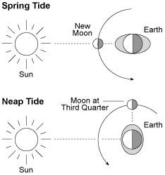 what is a neap tide google search moon phases pinterest. Black Bedroom Furniture Sets. Home Design Ideas