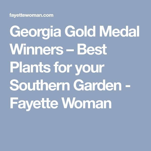 Georgia Gold Medal Winners – Best Plants for your Southern Garden - Fayette Woman