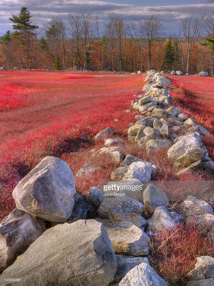 Stock Photo : Dividing rock walls define bright red blueberry fields on Vienna Mountain in Vienna, Maine.
