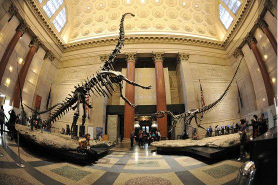 New York City Natural History Museum - Dinosaur Bones