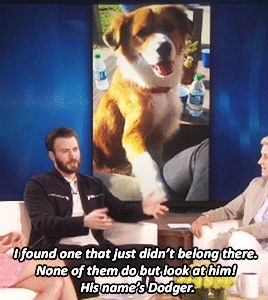 Chris Evans on his new dog.god i love that dog . i m going to give him a big hug n kiss.