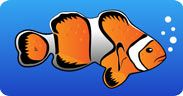 Great Barrier Reef Facts for Kids - Pictures & Information