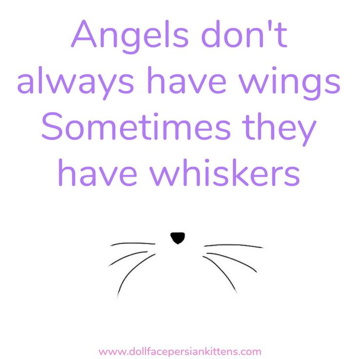 Angels don't always have wings. Sometimes they have whiskers.