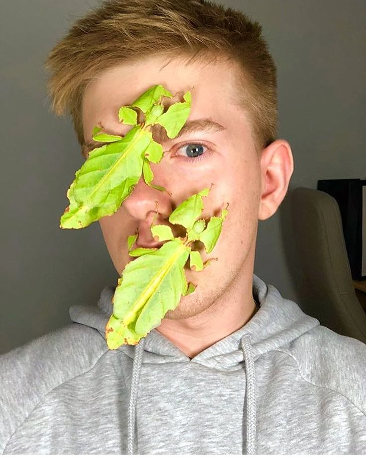Phyllium giganteum or Giant Leaf Insect  Follow @ecoconltd for more inspiring posts!  -  Want to be featured? Use the hashtag #ecoconftme :)  @insecthaus_adi