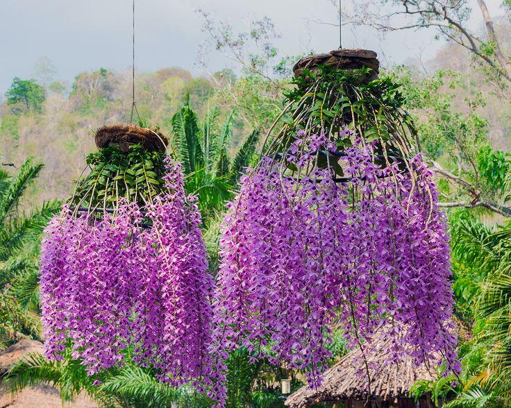 Beautiful Mounted Orchids!