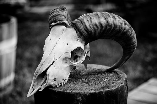 Animal skull ref a rams skull for the two small ram skulls on the front of the tower