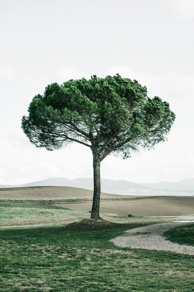 Ogq Backgrounds Hd Nature Photo Tree Photoshop Wallpapers