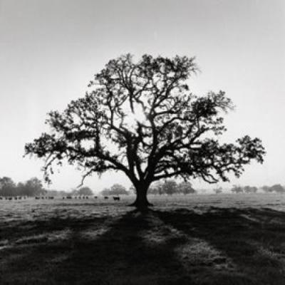 A big, beautiful tree