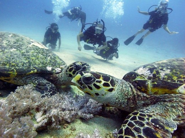 Gili Trawangan, Lombok, Indonesia, Penyu, diving