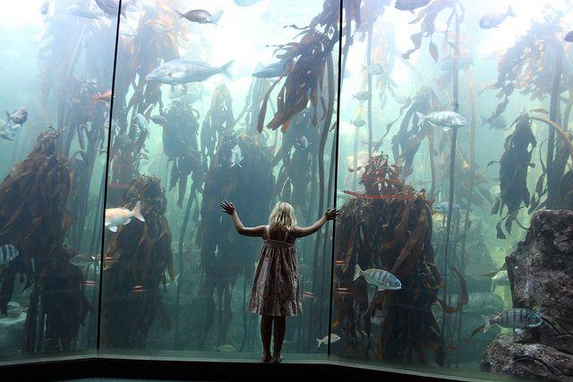 Touching fish, Two Oceans Aquarium, Cape Town