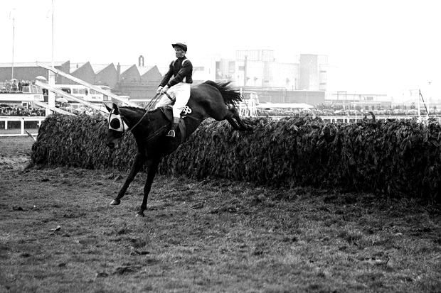 100-1 outsider Foinavon ridden by John Buckingham takes the last fence to win   So here it is - the most memorable National of all. Plenty of runners had a chance after the 22nd fence but Foinavon did not look one of them. Julian Muscat explains what happened next THERE was something distinctly providential about two horses named for a pair of neighbouring mountains on the northwest tip of Scotland. One of them, Arkle, was to prove himself the best steeplechaser of all time; the other was to…