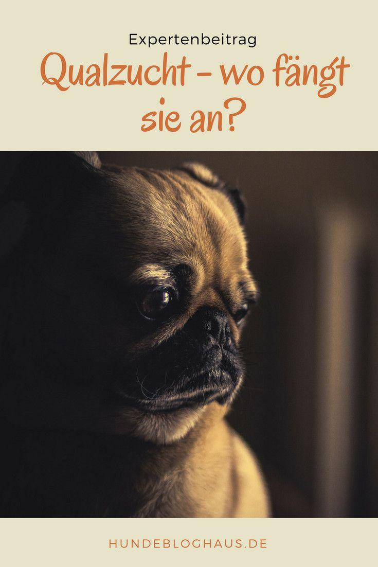 Könnte dein Hund auch betroffen sein?