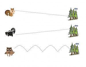 orman_hayvanları_çizgi_çalışmaları