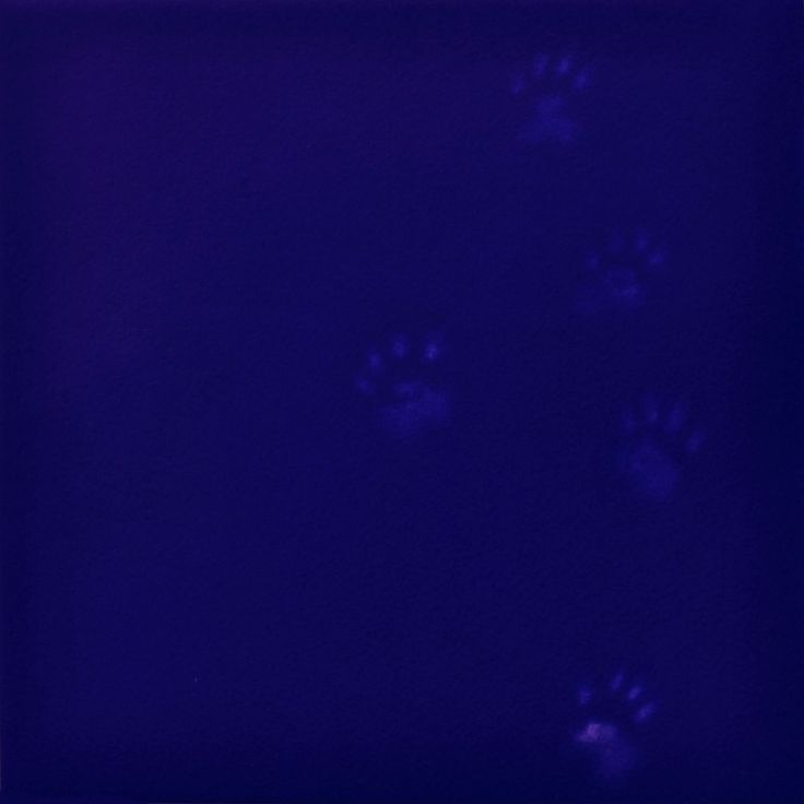 Yves Klien's Cat | Mychael Barratt