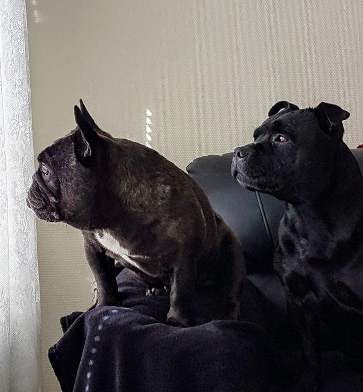"💕 Me and my ""brother"" Oscar the bulldog 💕"